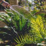 Modelos de Jardim: saiba como fazer um jardim perfeito